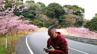 214桜1