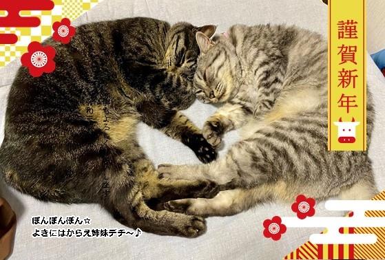 24825_nenga_eto_wagara_ume.jpg