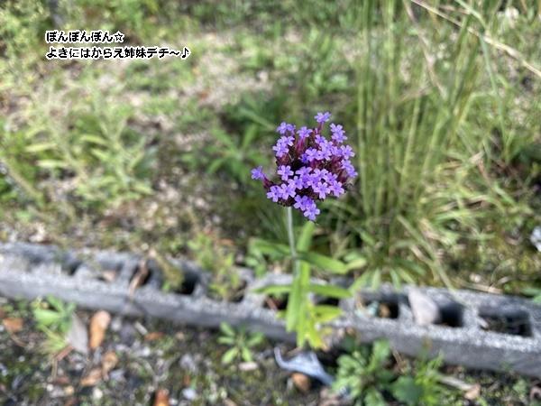IMG_0155_20201018102044b82.jp<br />g
