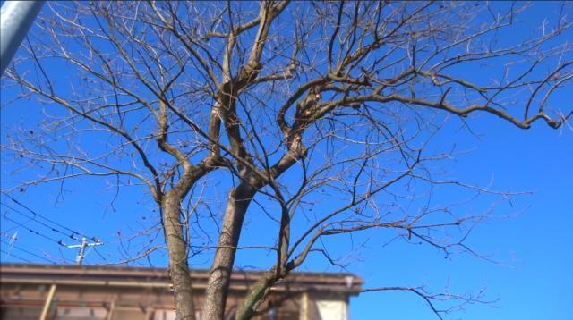 屋根上の庭木3