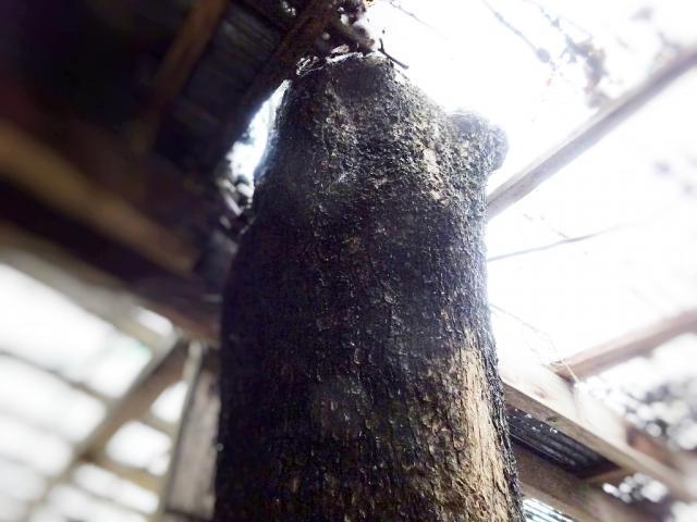 屋根上の庭木4