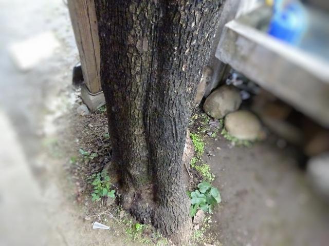 屋根上の庭木5