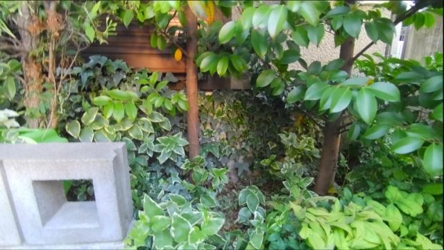 庭木伐根 (2)