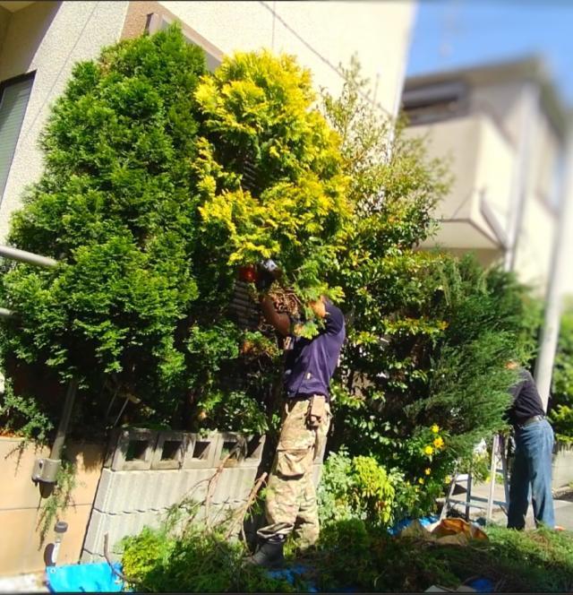 庭木伐根 (3)