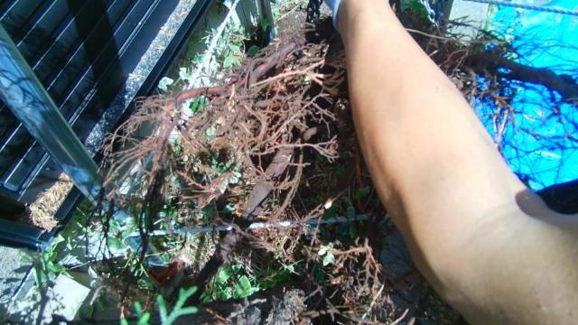 庭木伐根 (15)