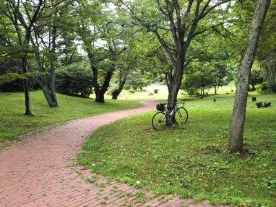 三ツ池公園 新緑