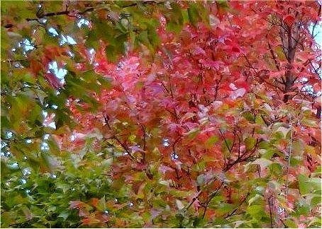 何の葉なのかはわかりません 紅葉
