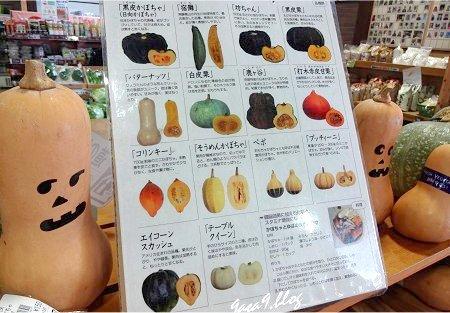 いろんなかぼちゃ いろいろ
