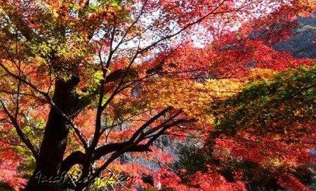 いろいろな色の混ざった紅葉が好き