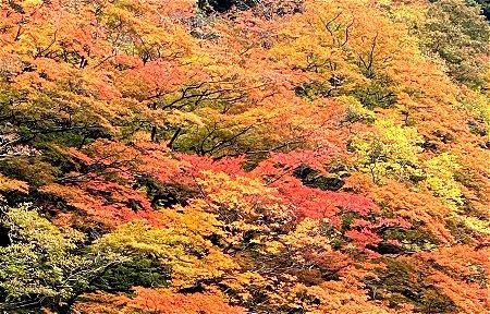 友人撮影の奈良の紅葉