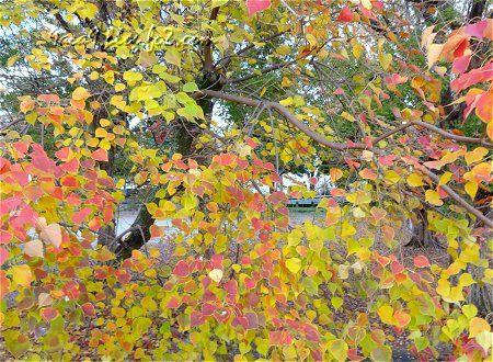 2010 11 20 こんな紅葉も素敵 2