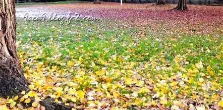 2010 11 20 こんな紅葉も素敵 4