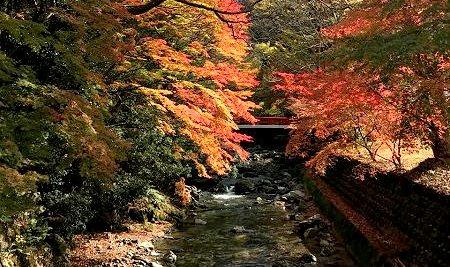 滋賀県の紅葉(友人撮影)
