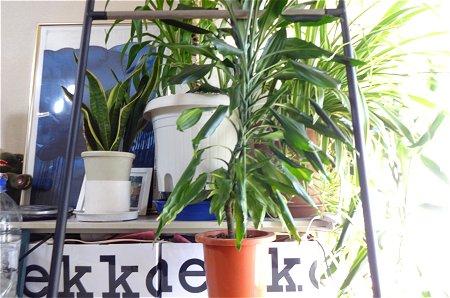 何も掛けない時は観葉植物の日光浴