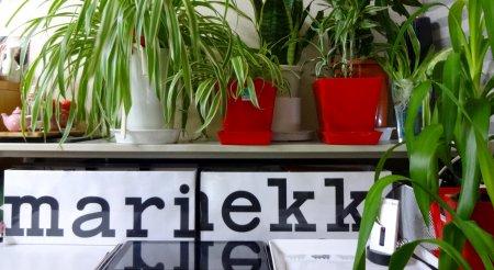 marimekko ボックス 観葉植物