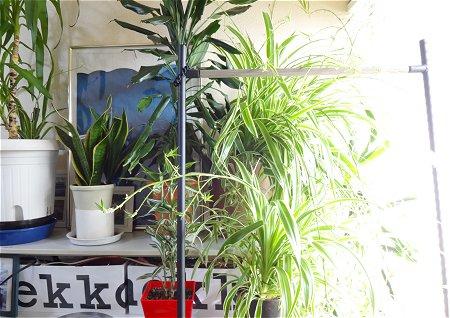部屋 窓 観葉植物 室内干し styleハンガー