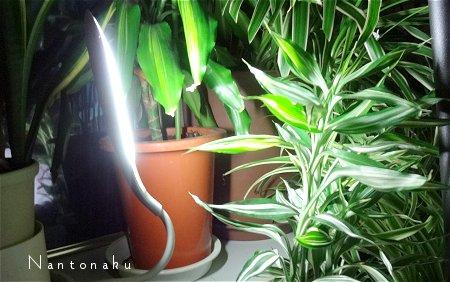 Nantonaku 使い切りタイプのLEDライト2