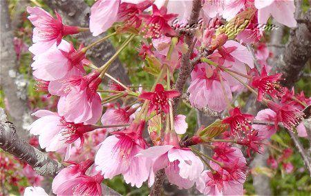 桜公園でございますわ 6