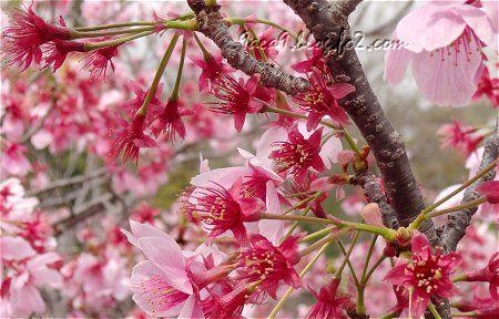 桜公園でございますわ 7