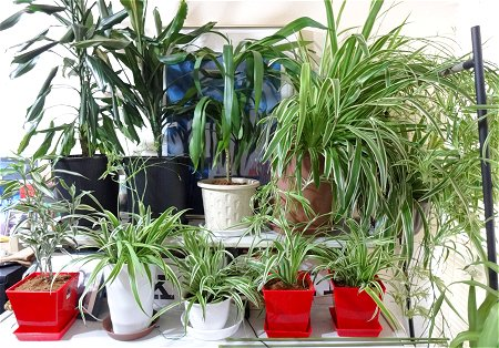 植物の植え替え2021