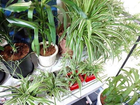 植物の植え替え2021 2