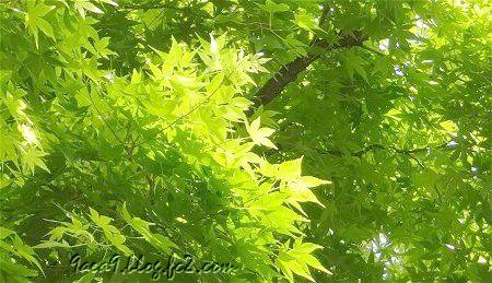 新緑は美しい