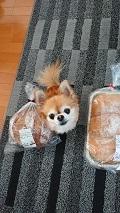 210416パン