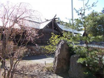 北海道神宮 本殿 桜350