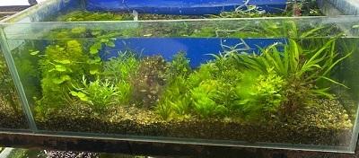 水草0221