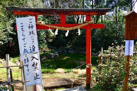 s-鷲宮神社DSC_1932_01