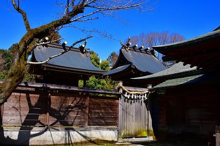s-鷲宮神社DSC_1948_01