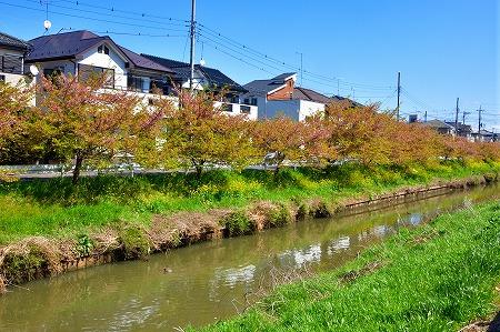 s-鷲宮神社DSC_1956_01