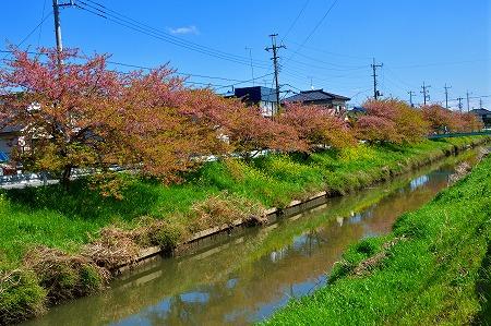 s-鷲宮神社DSC_1957_01