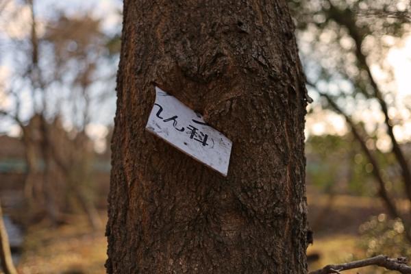モノ喰う木