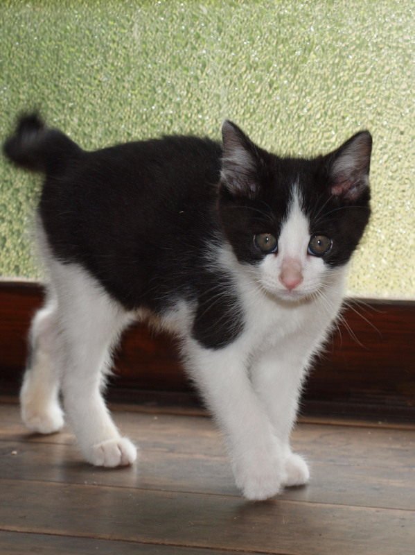 玄関先に捨てて行かれた猫たち (5)