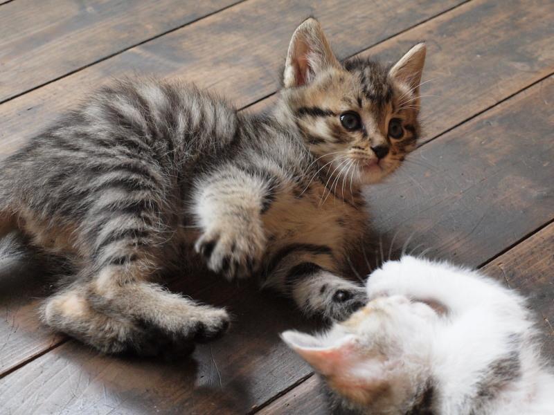 玄関先に捨てて行かれた猫たち (23)