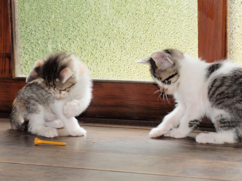 玄関先に捨てて行かれた猫たち (30)
