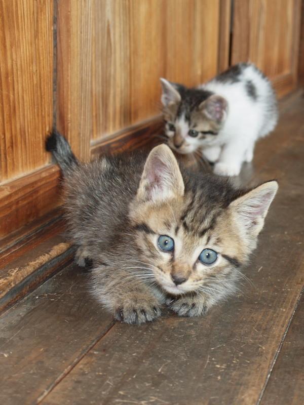 玄関先に捨てて行かれた猫たち (36)