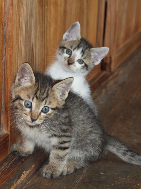 玄関先に捨てて行かれた猫たち (39)