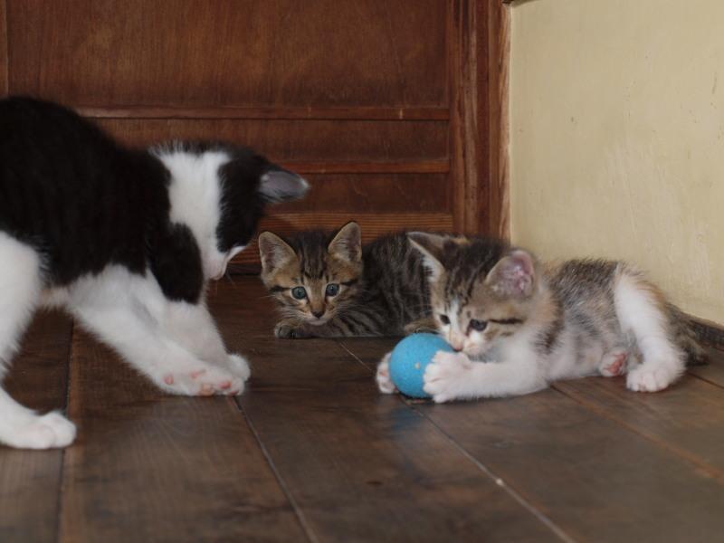 玄関先に捨てて行かれた猫たち (52)