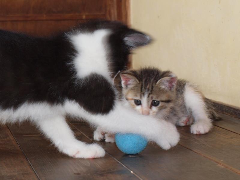玄関先に捨てて行かれた猫たち (54)