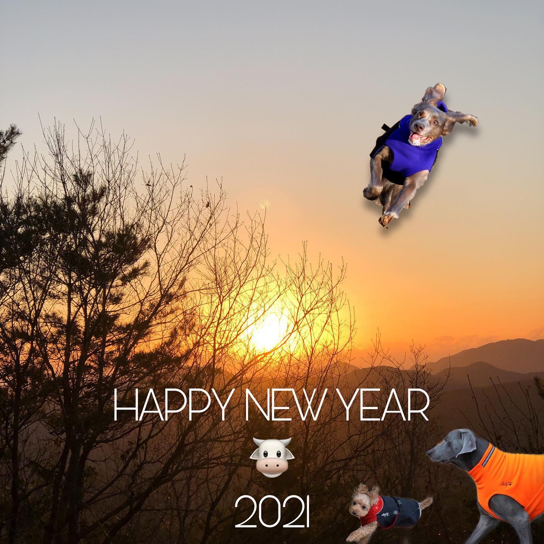 weimaraner_bambi_2021010101.jpg