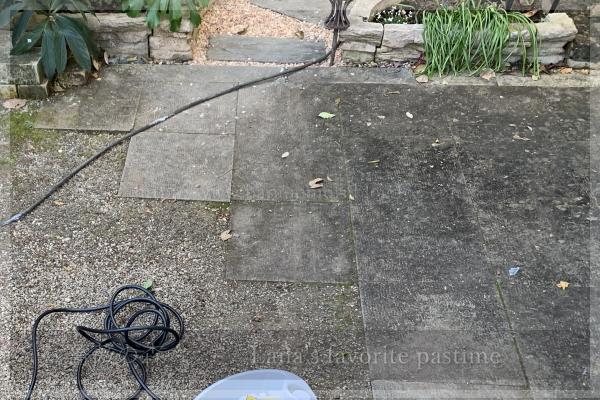 庭掃除 テラス コケ除去 スチームクリーナー 20201204