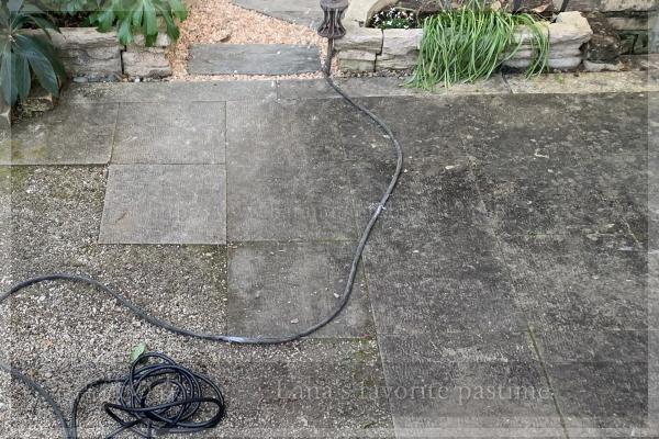 庭掃除 テラス コケ除去 スチームクリーナー 20201205