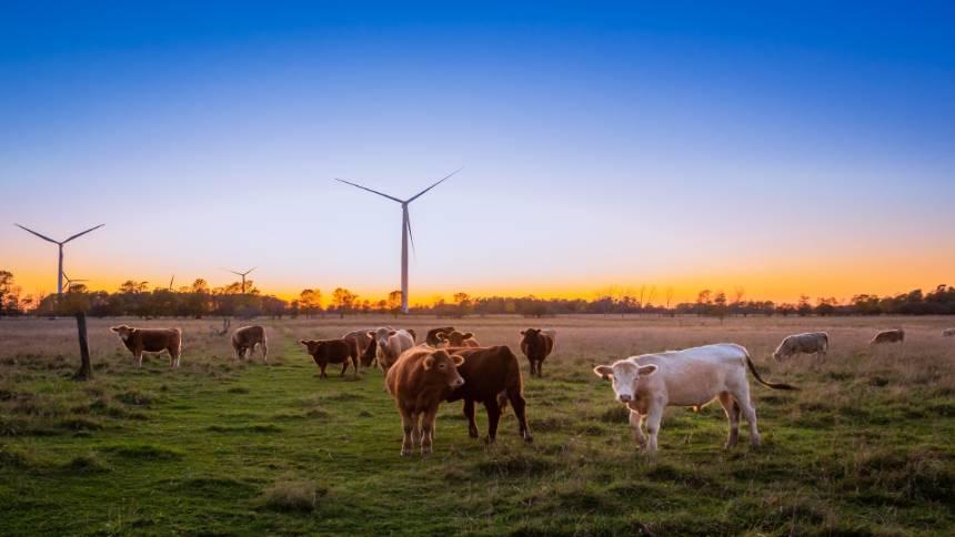 Cows-in-the-farm