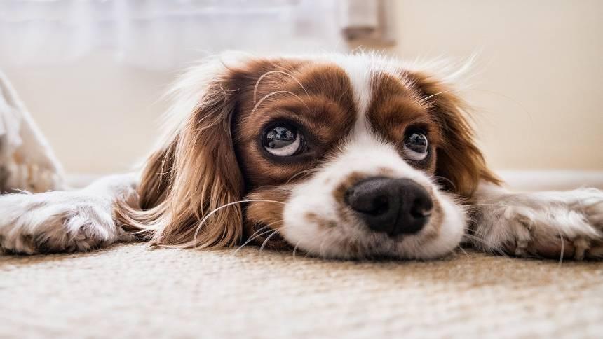 Cute-dog1
