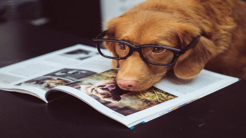 The-dog-can-read