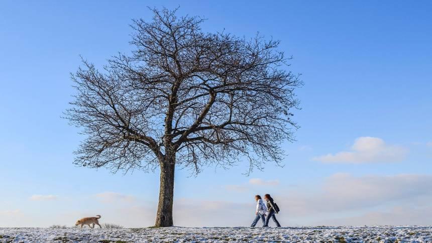 Walking-under-a-tree