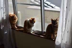 窓辺で整列