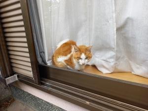窓辺外から
